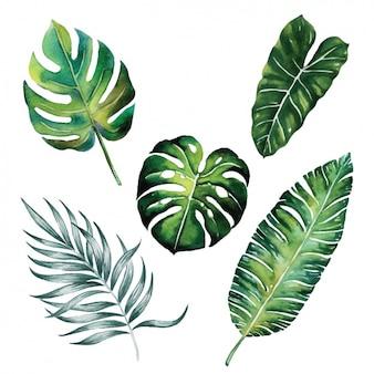 Aquarela leaves collection