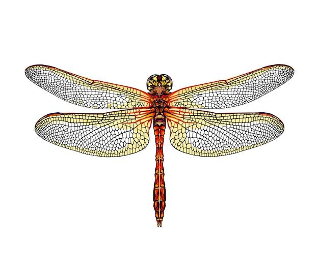Aquarela libélula em branco