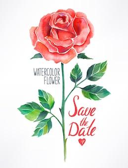 Aquarela linda rosa vermelha. ilustração desenhada à mão