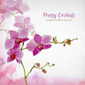 Aquarela lindas orquídeas
