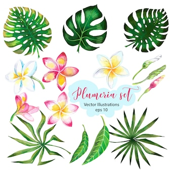Aquarela para banner design ou flyer com folhas de palmeiras exóticas, flores de plumeria.