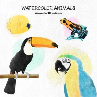 Aquarela pássaros tropicais e outros animais exóticos ajustaram