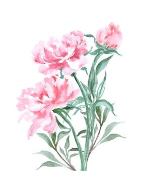 Aquarela peônias florescendo projeto primavera ou verão para convite, casamento ou cartões comemorativos.