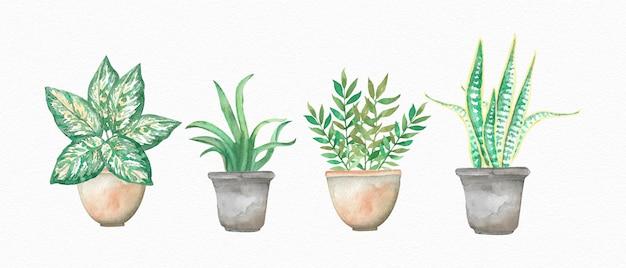 Aquarela plantas em vasos mão desenhada