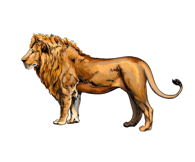 Aquarela retrato de um leão em branco