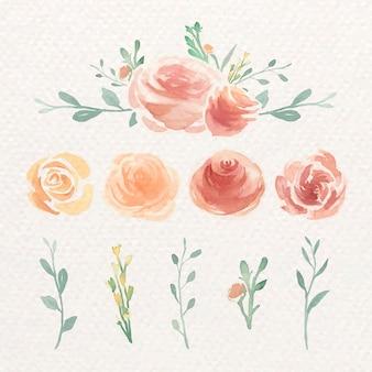 Aquarela rosa conjunto