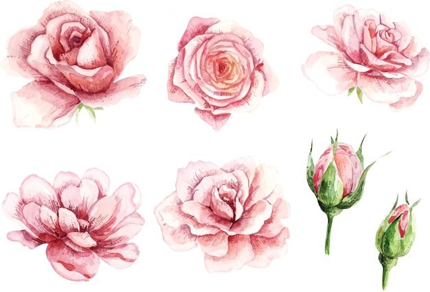 Aquarela rosa. pintados à mão, isolados