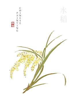Aquarela tinta chinesa pintura arte ilustração natureza planta de arroz do livro das canções.
