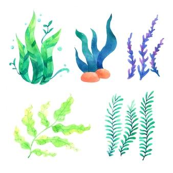 Aquarelas de corais