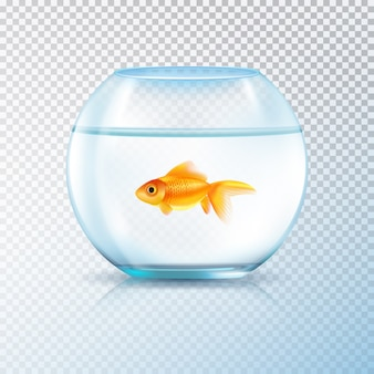 Aquário com único peixe dourado