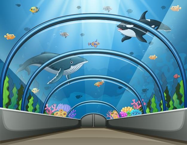 Aquário público com ilustração de peixes e recifes de coral