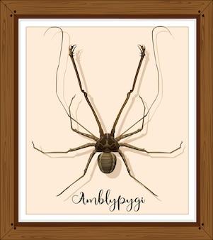 Aranha amblypygi em moldura de madeira