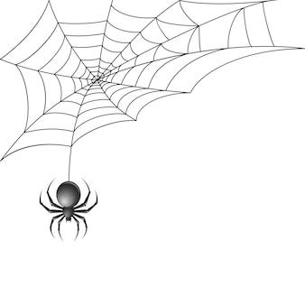 Aranha preta com teia de aranha