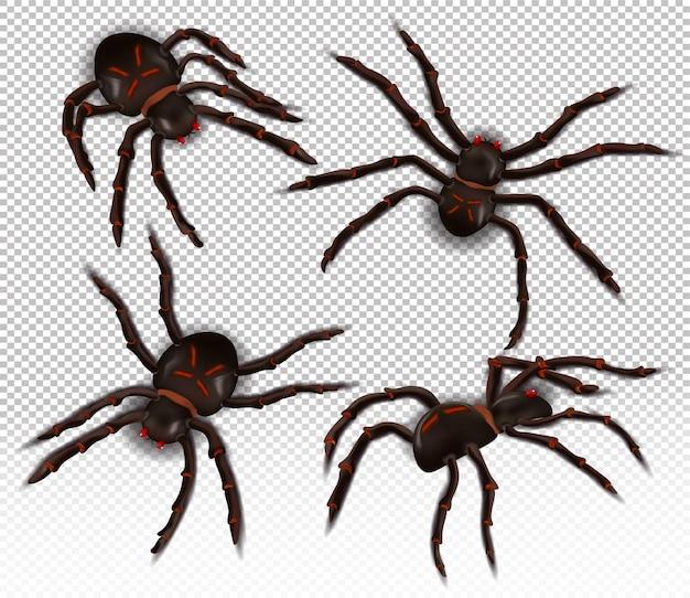 Aranha selvagem de diferentes ângulos
