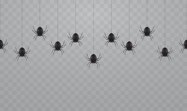 Aranhas pretas penduradas em um fundo transparente. aranhas assustadoras em teias de aranha para o halloween.