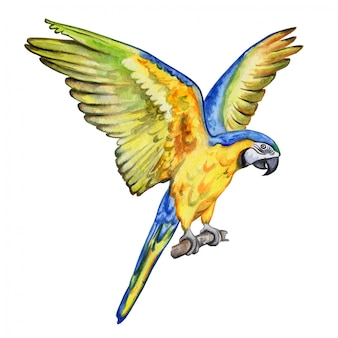 Arara papagaio voando