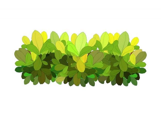 Arbusto verde abstrato do jardim