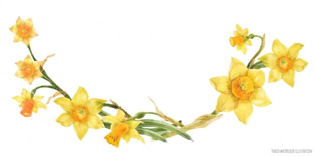 Arco decorativo de aquarela com flores narcisos amarelos