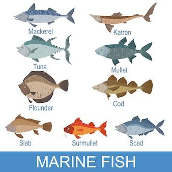 Ardósia de identificação de peixes marinhos com nomes