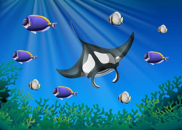 Arraia e muitos peixes sob o oceano