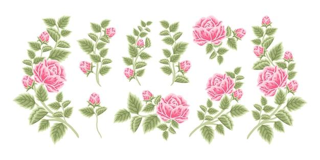 Arranjo de flores rosa desenhado à mão e coleção de elementos de buquê
