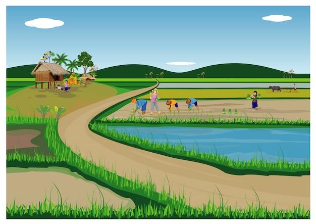 Arroz de transplante de agricultor semeando em design de vetor de arroz