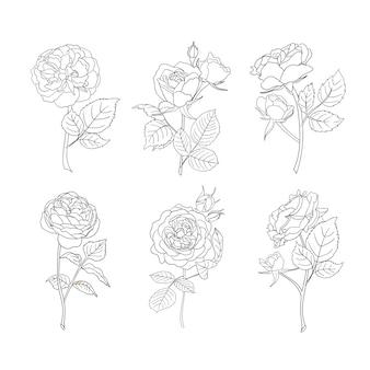 Arte da linha de rosas. ícones do vetor de flores.