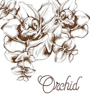 Arte de linha de flores de orquídea