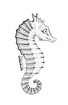 Arte gravada do cavalo marinho. esboce a ilustração dos peixes do cavalo-marinho.