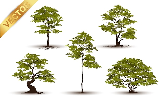 Árvore bonita realística em um fundo branco.