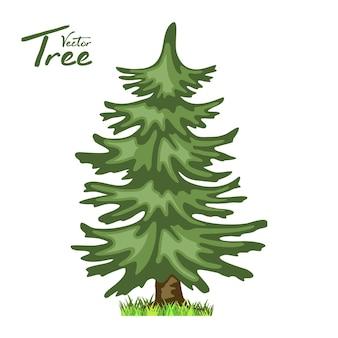 Árvore conífera em quatro estações - primavera, verão, outono, inverno