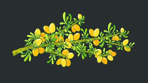 Árvore de argan vector botânica ramo óleo baga folhas verdes arte mão desenhar design gráfico