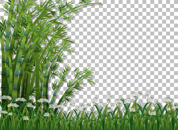 Árvore de bambu e grama em fundo transparente