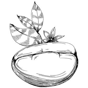 Árvore de café e feijão na mão de estilo gráfico desenhar sobre fundo branco. objeto isolado com ilustração de estilo gravado. o melhor para design de logotipo, menu, etiqueta, ícone, carimbo.