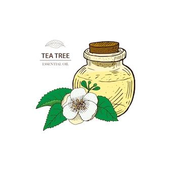 Árvore de chá. ilustração de óleo essencial