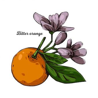 Árvore de citrinos laranja amarga azedo de marmelada de bigarade amarga em folha folha de citrus aurantium e flores roxas. de frutas exóticas tropicais, óleo essencial, aromatizante ou solvente. Vetor Premium