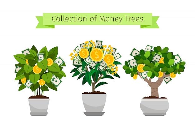 Árvore de dinheiro na coleção de vaso de flores