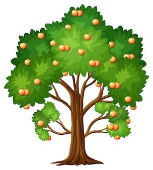 Árvore de fruta laranja em estilo cartoon, isolada no branco