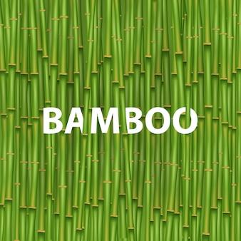 Árvore de grama de bambu chinês.