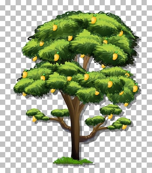 Árvore de manga em fundo transparente