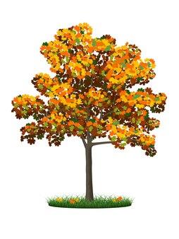 Árvore de outono realista e grama em um fundo branco