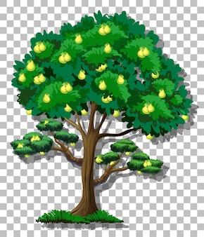 Árvore de pera em fundo transparente