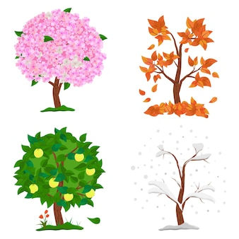 Árvore em quatro estações - primavera, verão, outono, inverno.