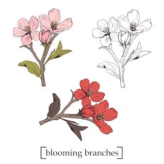 Árvore florescendo. definir coleção. ramos de flor botânica desenhada de mão