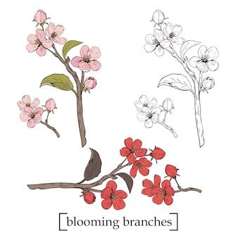 Árvore florescendo. definir coleção. ramos de flor botânica desenhada de mão Vetor Premium