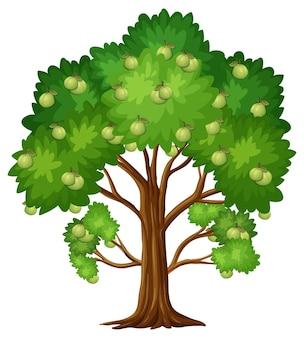 Árvore frutífera de goiaba isolada em fundo branco