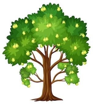 Árvore frutífera pêra isolada no branco