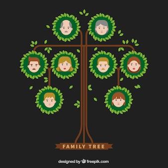 Árvore genealógica com as folhas