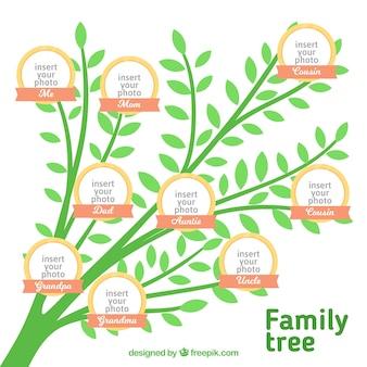 Árvore genealógica de cor verde