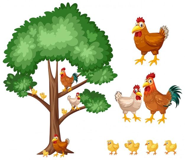 Árvore grande e galinhas em branco